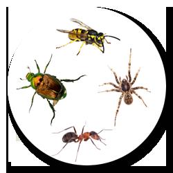 Pest Control Colchester